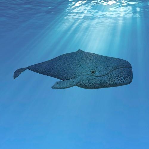 Foto di una balena