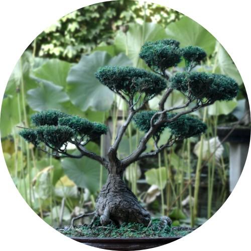 Foto di un bonsai con più rami