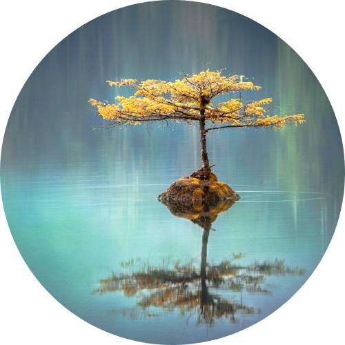 Foto di un alberello che si riflette in un lago
