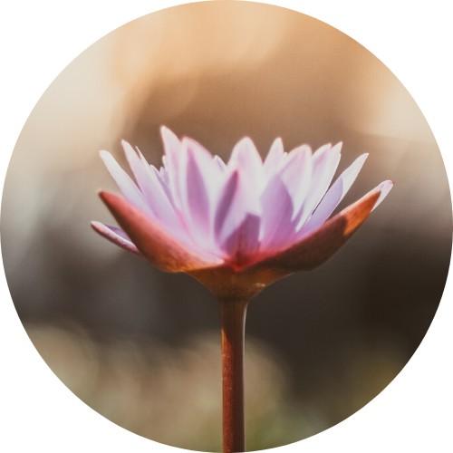 Foto di un fiore rosa