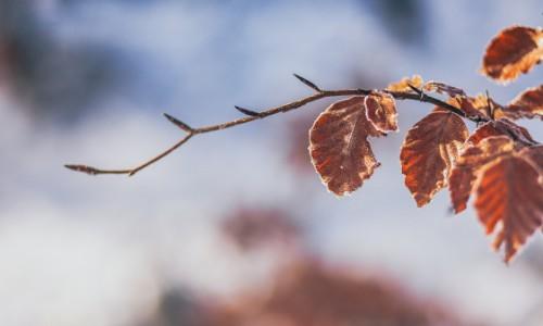 La foto di un ramo fiorito